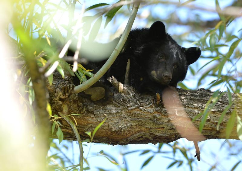 bears22