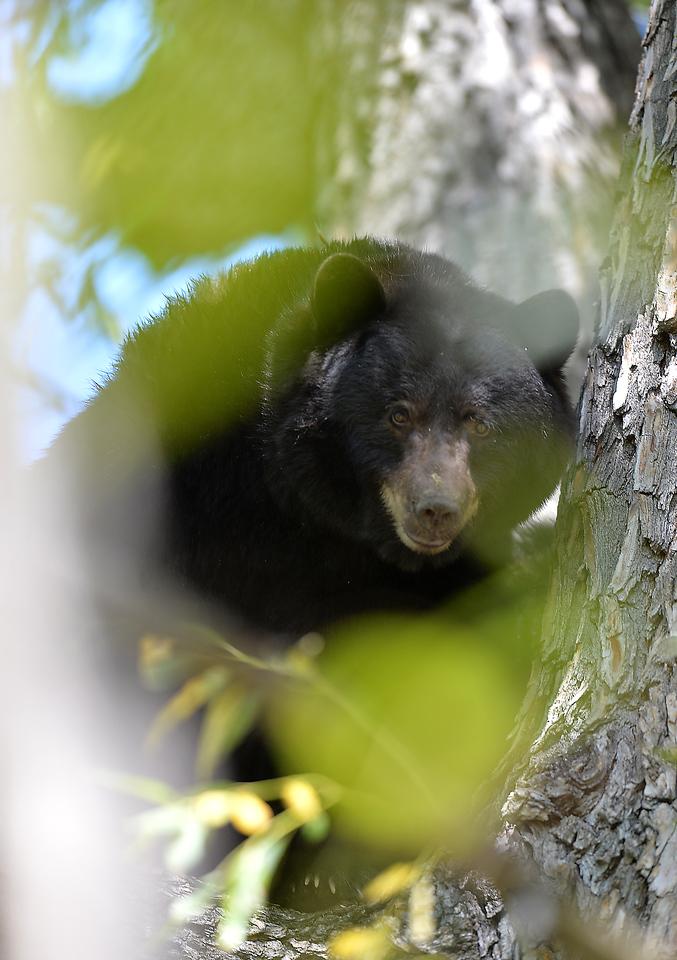 bears28