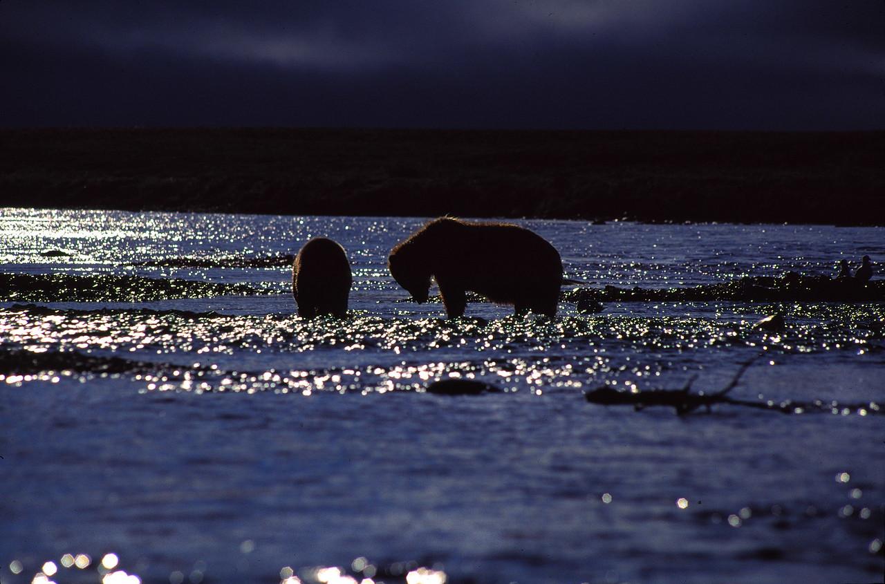 Funnel Creek Bears