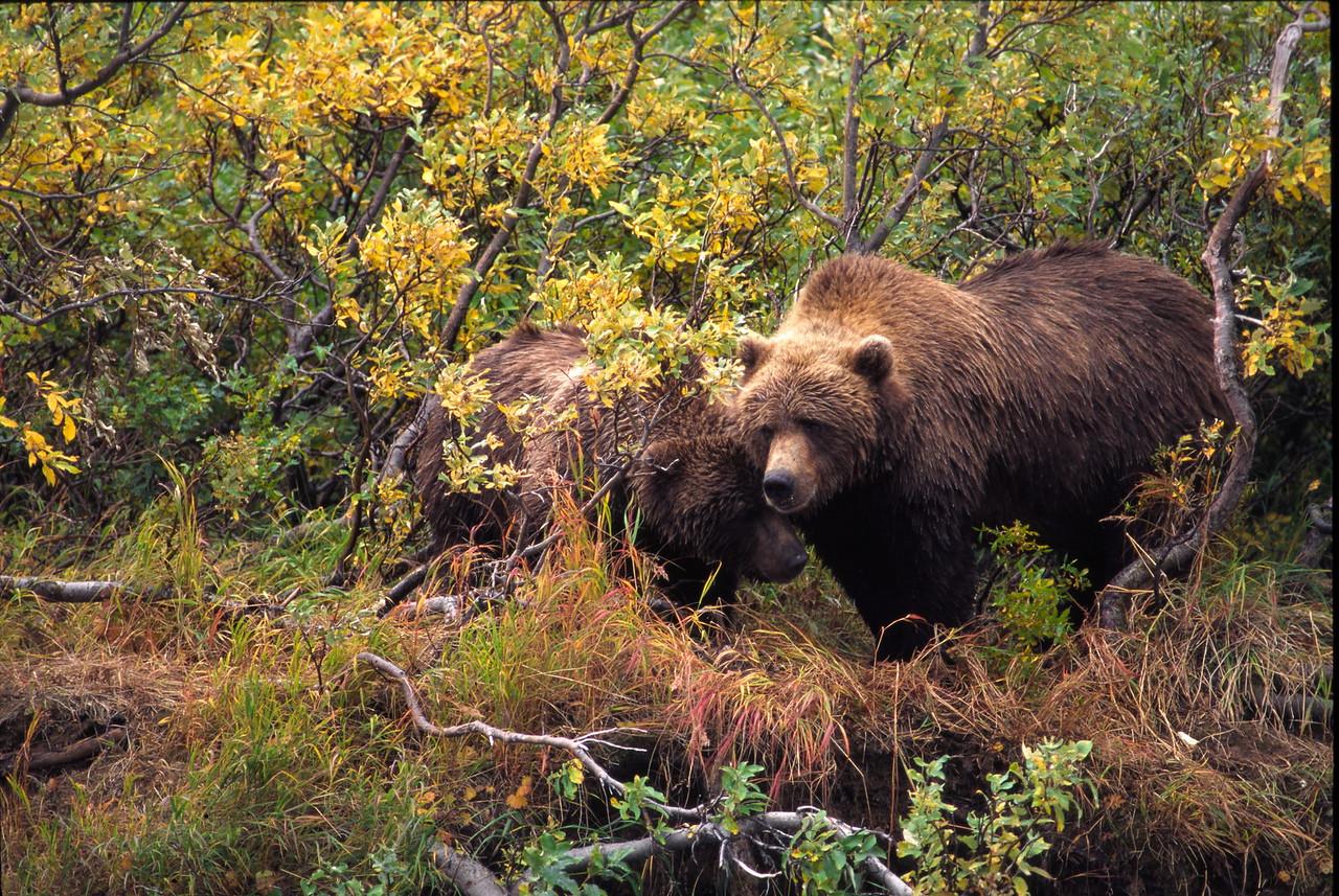 Battle Creek Bears 2