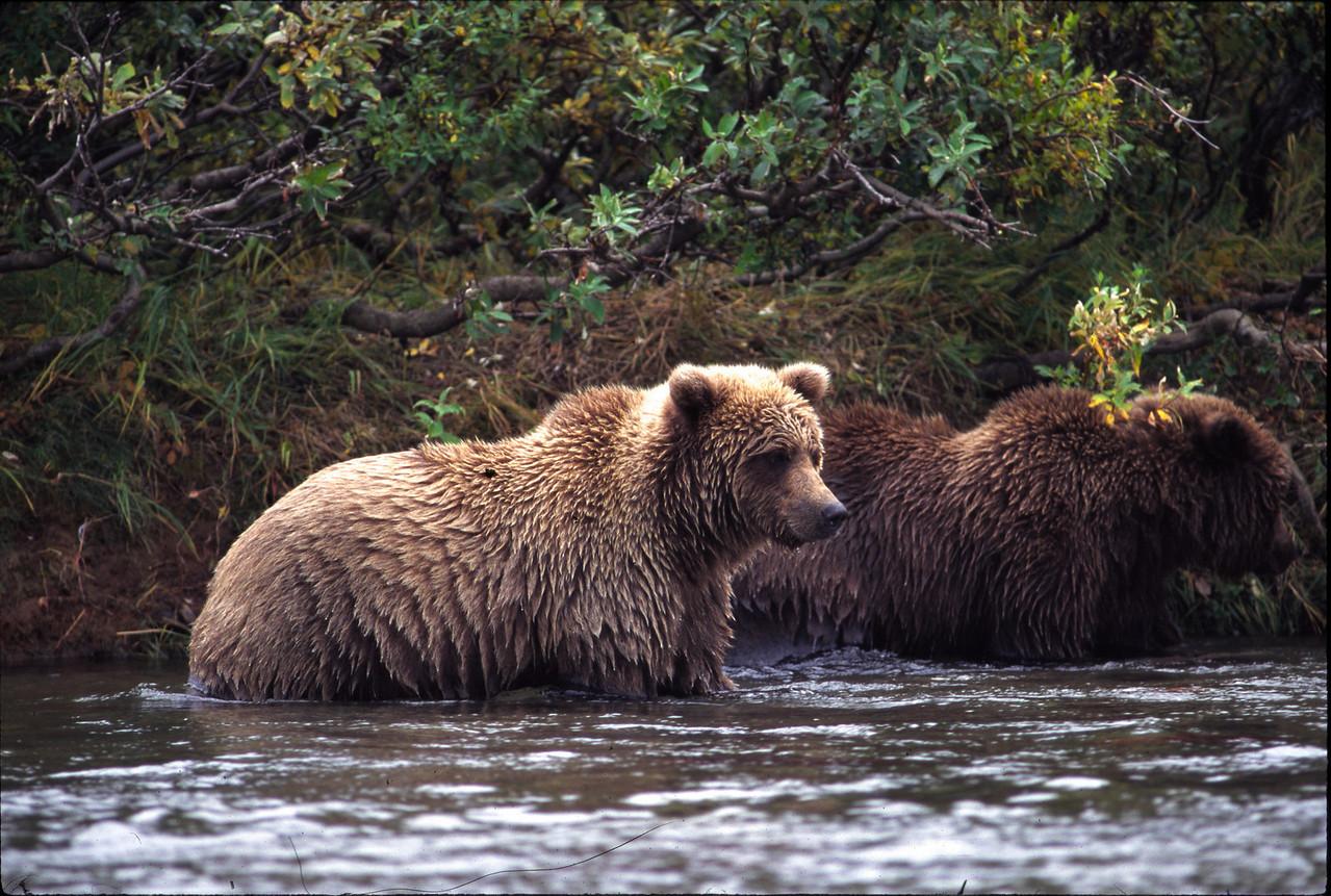 Battle Creek Bears