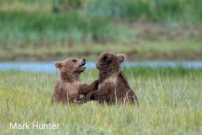 Katmai Cubs