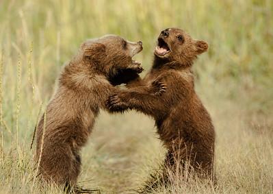 Two Little Bears