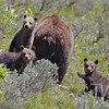 """mom"" and the kids,late spring , near Coulter bay , Grand Tetons N.P."