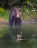 Kodiak Bear, one enchanted evening.