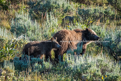 Grizzly bear and her cub
