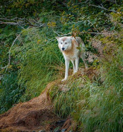 photo by: robin harrison (www.robinharrison.net)