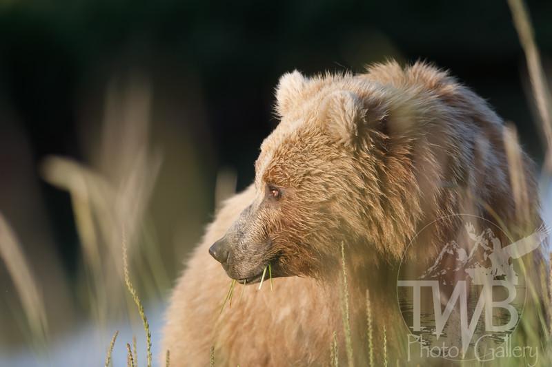 TWBPhotoGallery-8932