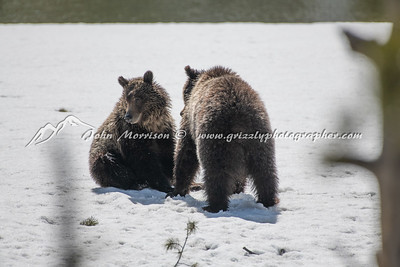 Grizzly bear and her yearling cub