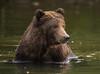 One sweet bear!