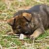 pup&rock