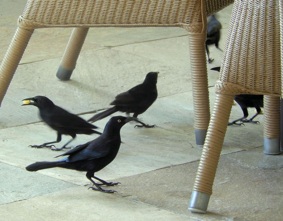 Breakfast Birds