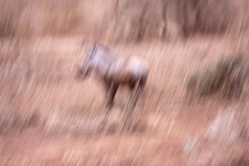 Shaken, not stirred - an abstract look at a Warthog.<br /> <br /> Save for the normal post-processing which all my photos receive, the effect on this image photo this isn't the result of any Photoshop trickery.  It's actually from me trying to snap a photo from a moving safari jeep.  Ordinarily a shot this blurred and distorted would have gotten deleted immediately, but the uniform shake on this one was enough to have caught my eye out in the field and I chose to save it.  I'm glad I did for although its not a great wildlife shot, I've come to find it interesting and artistic all the same.<br /> <br /> Location: Amboseli National Park, Kenya<br /> <br /> Lens used: Canon 100-400mm f4.5-5.6 IS