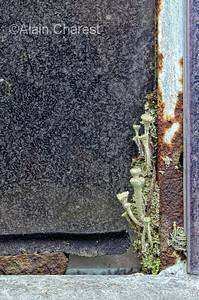 """"""" Récupérateurs naturels """" Scrap yard / courre à scrap, St-Amable, Qc, Canada;  a place where peoples give up things and the owner buy some in garage sales or flea market. I visit this place since 2011 with three photographers in the project """" Beauté récupérée"""".  Les gens abandonnent chez ce propriétaire des choses dont ils ne veulent plus et il achète dans les ventes de garage et les marchés aux puces des objets divers. Depuis 2011 je visite l'endroit avec trois autres photographes dans le cadre du projet """"Beauté récupérée""""."""