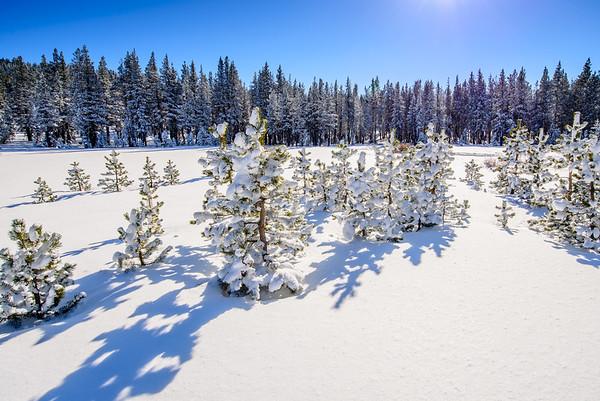 Fresh Powder Heaven, Lake Tahoe