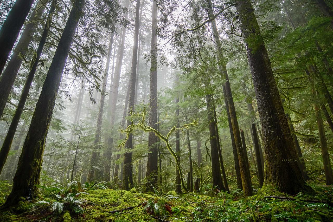 Sunrise Oregon Forest