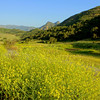 Southern California Malibu Nature & Landscapes