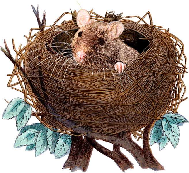 nest-rat_0001_Layer-23-copy