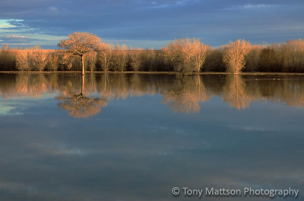 Bosque Reflections