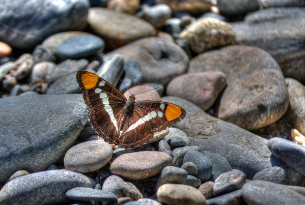Butterfly With A Decorative Pattern