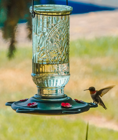 Hummingbird at Wamplers Lake, MI