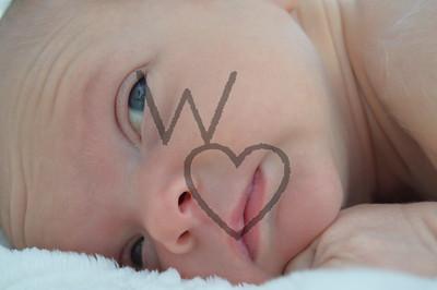 Josey Bowman Newborn