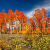 Cedar Breaks, Utah