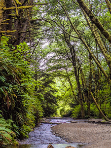Fern Canyon, Prairie Creek State Park, Humboldt, California