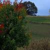Landscape Class at pumpkin patch