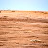 Two elk at a prairie dog town