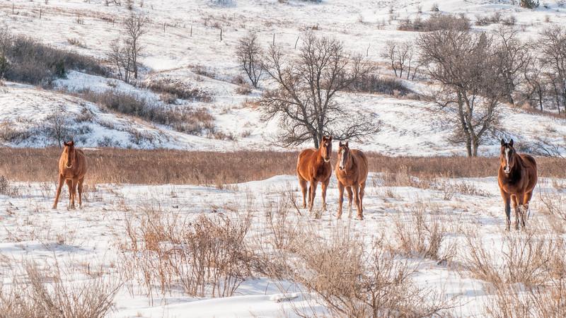 four horses winter billings county