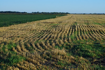 Field Edges