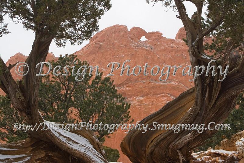 Kissing Camels framed by Juniper Tree, Garden of the Gods Park, Colorado Springs, Colorado