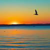 9. pelican at sunset