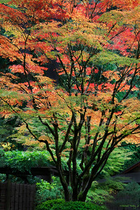 Fall in the Japanese Gardens.