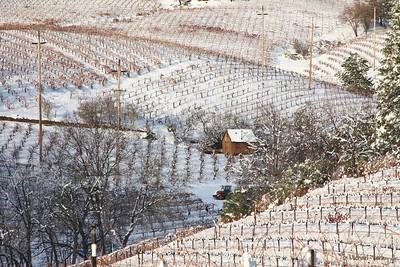 Snowy vinyard.