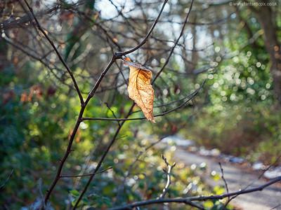 Winter leaf on the sun.