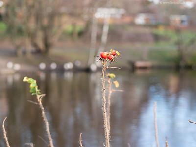 Close up of plants at South Hill Park lake
