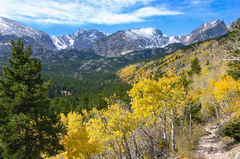 Colorful Aspen trees in the Colorado Rockies