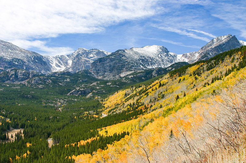 Golden Aspen trees in the mountains