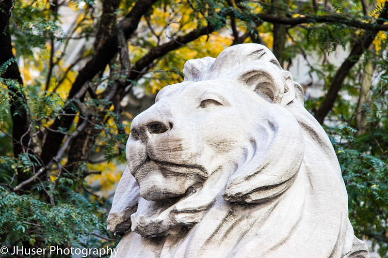 Closeup of lion statue at the New York Public Library