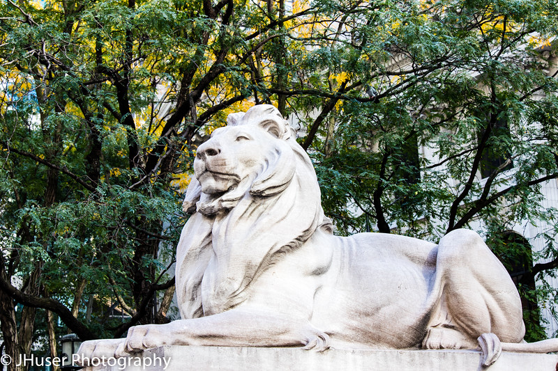 Majestic lion at the New York Public Library