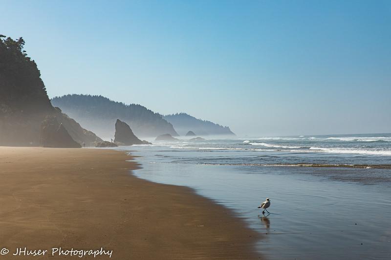 Low fog on the beach along the Oregon coast