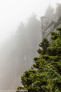 Fog surrounds the trees in Oregon