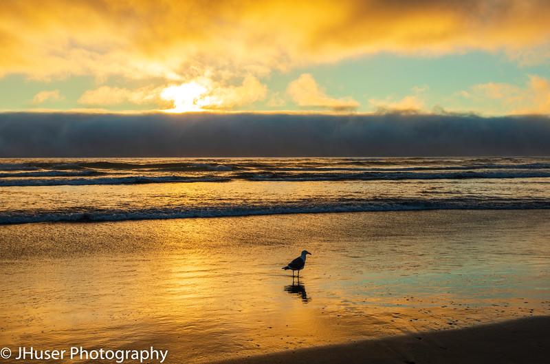 Sea Gull on Cannon Beach at sunset