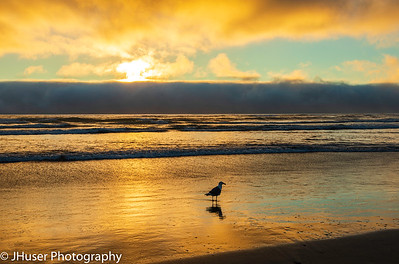 Sea Gull on Cannon Beach at sunset