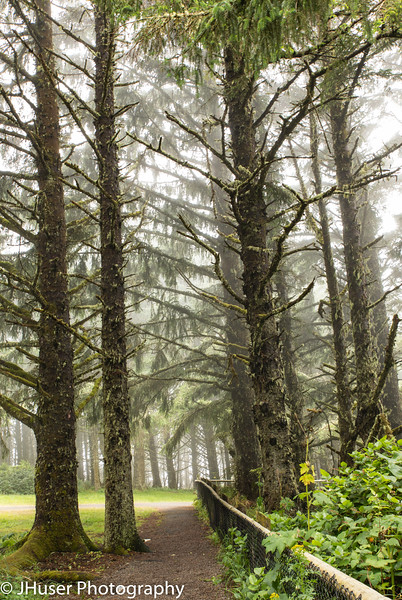Moss covered trees in the fog