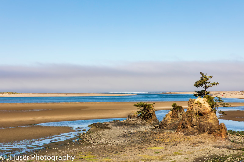 Trees growing on the beach along the Oregon coast