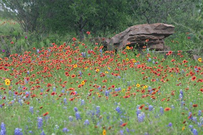 Colorful mixture of wildflowers