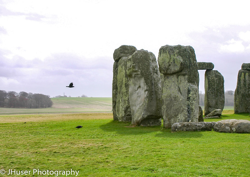 Bird flying by Stonehenge
